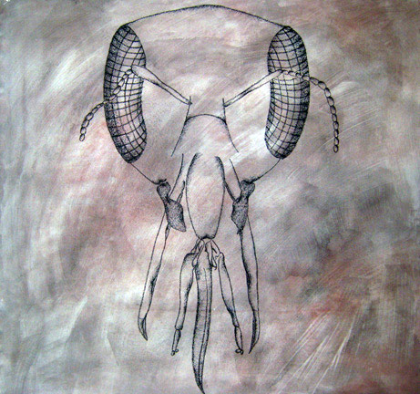 Anatomy of a Warrior 36 x 36in